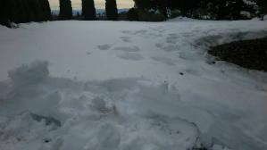 群馬 前橋 住宅塗替え 雪かき