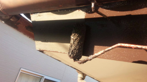群馬 前橋 住宅塗装 樋、破風板下塗り