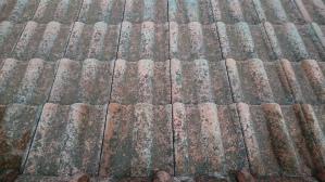 群馬 塗装 屋根塗装 塗装前の苔