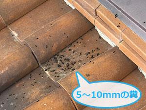 コウモリの糞の被害
