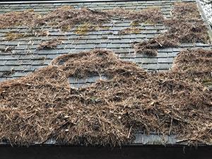 嬬恋村 屋根落葉堆積