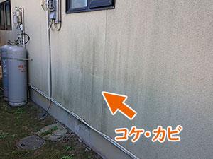 前橋市堤町 モルタル外壁コケ・カビ